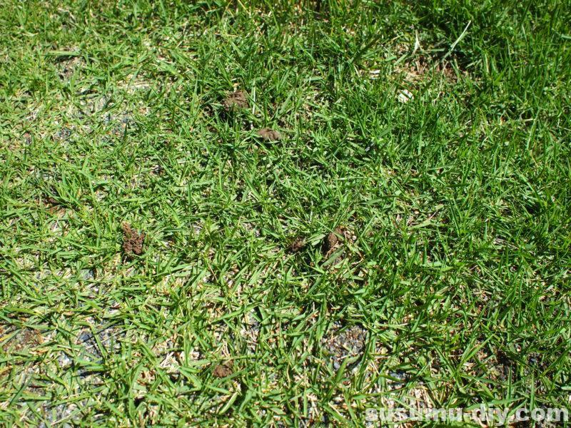 高麗芝 肥料 化成肥料 芝生肥料 ガーデン ガーデンライフ ガーデニング 自然素材 自然素材住宅 自然素材の家 玄関アプローチ コンクリート モルタル 敷石 ウリン ウリン材 ピンコロ シマトネリコ ヤマボウシ 自作 庭づくり 庭 やればできる 外構 芝生 芝 芝刈り 芝生再生 芝生更新 芝刈り機 サッチング エアレーション 目土 目土入れ ふるい 雑木の庭 雑木 木塀 ウッドフェンス 玄関アプローチ 芝 芝生 庭木 DIY DIY男子 DIY女子 自作 日曜大工 アウトドア 簡単 おしゃれ 材料 愛知県 岐阜県 三重県 すすむ susumu susumudiy