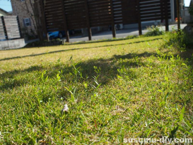 カラスノエンドウ 高麗芝 肥料 化成肥料 芝生肥料 ガーデン ガーデンライフ ガーデニング 自然素材 自然素材住宅 自然素材の家 玄関アプローチ コンクリート モルタル 敷石 ウリン ウリン材 ピンコロ シマトネリコ ヤマボウシ 自作 庭づくり 庭 やればできる 外構 芝生 芝 芝刈り 芝生再生 芝生更新 芝刈り機 サッチング エアレーション 目土 目土入れ ふるい 雑木の庭 雑木 木塀 ウッドフェンス 玄関アプローチ 芝 芝生 庭木 DIY DIY男子 DIY女子 自作 日曜大工 アウトドア 簡単 おしゃれ 材料 愛知県 岐阜県 三重県 すすむ susumu susumudiy